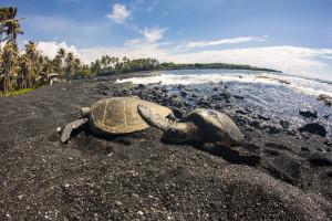 Punaluu Beach Pic Shutterstock
