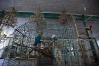 World Parrot Refuge, now closed due to founder's death