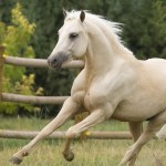 23 Beautiful Hd Horse Wallpapers