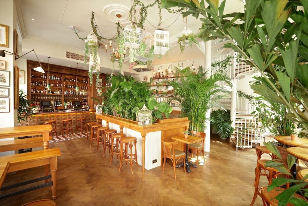 A bar area with is full of green plants and has light wooden decor