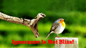 Ignorance Is Not Bliss