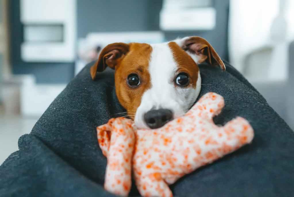Während einer Quarantäne, kann spielen den Hund auslasten