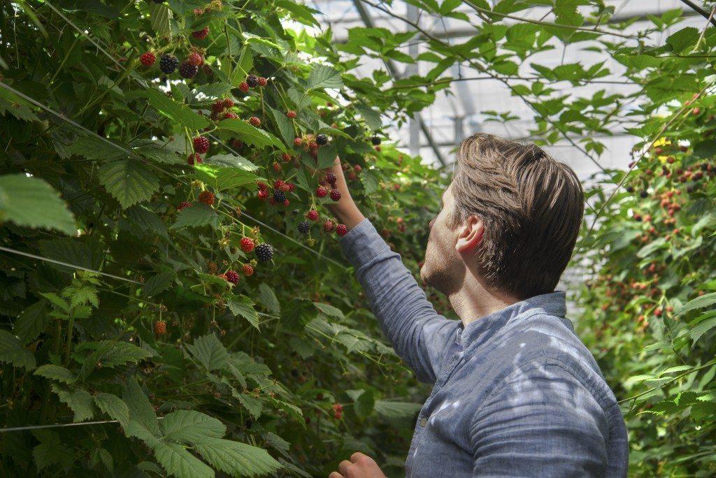 zacht zomerfruit