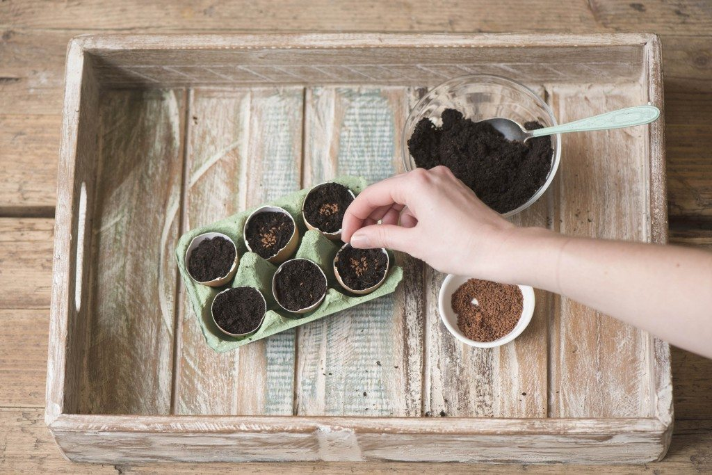 DIY seedlings eggshells