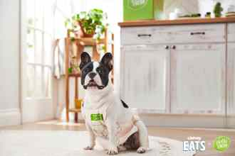 How to Make Chewy DIY Dog Treats From a HelloFresh Recipe