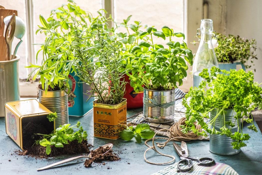 Kräutergarten Küche: Blechdosen