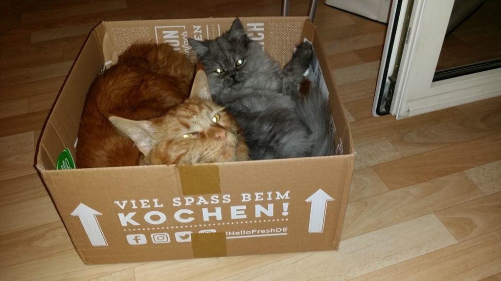 Unsere Box - Beliebt bei Katzen