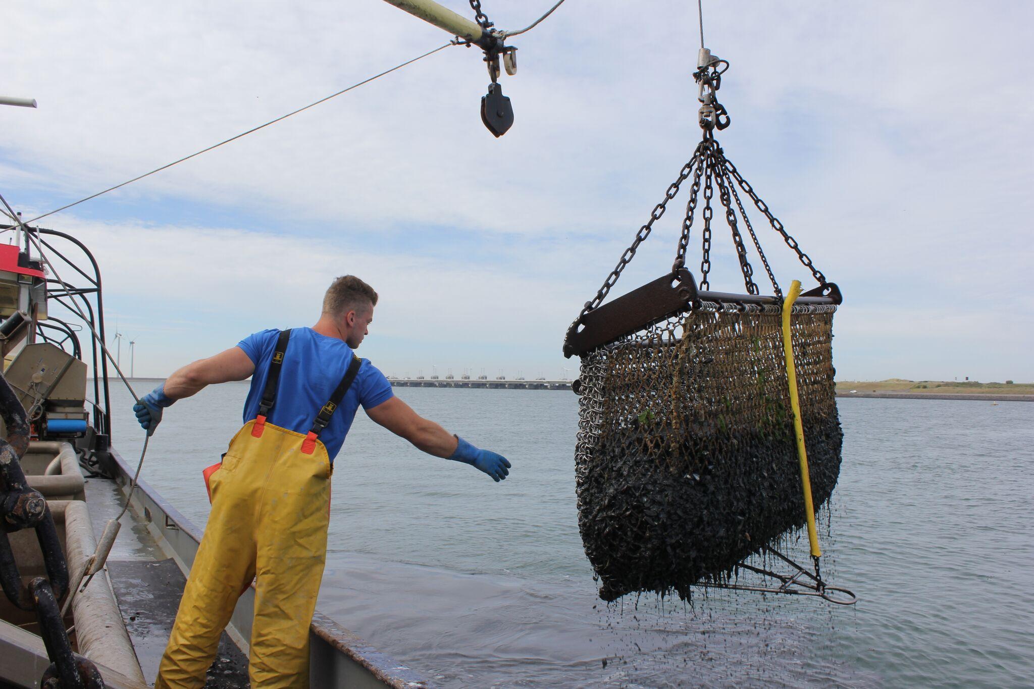 À la pêche aux moules ! | the fresh times
