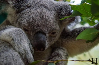 20120425-175608-Australia Zoo, Australien, Weltreise, Zoo-20120425-165608-Australia-Zoo-Australien-Zoo_DSC9086