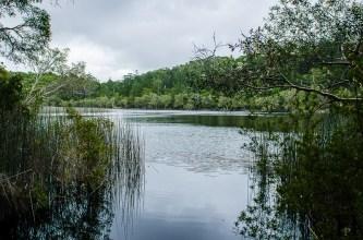 20120430-143344-Australien, Fraser Island, Great Sandy Nationalpark, Lake Allom, Weltreise-20120430-143344-Australien-Fraser-Island-Great-Sandy-Nationalpark-Lake-Allom_DSC9648