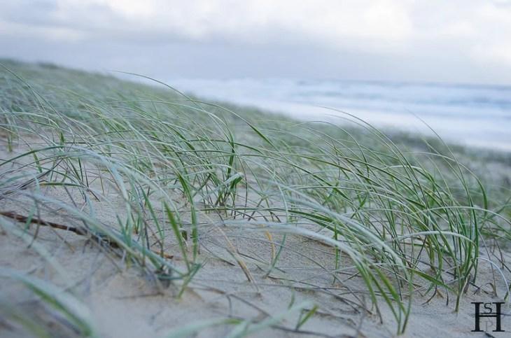 20120430-163456-Australien, Fraser Island, Great Sandy Nationalpark, K'Gari Camp, Strand, Weltreise-20120430-163456-Australien-Fraser-Island-Great-Sandy-Nationalpark-KGari-Camp-Strand_DSC9662