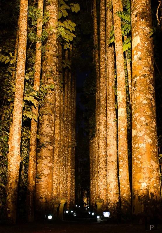 20120513-184526-Australien, Mena Creek, Paronella Park, Weltreise-20120513-184526-Australien-Mena-Creek-Paronella-Park_DSC1180