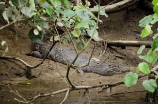 20120516-145902-Australien, Bootsfahrt, Daintree Nationalpark, Daintree River, Krokodile, Weltreise-20120516-145902-Australien-Bootsfahrt-Daintree-Nationalpark-Daintree-River-Krokodile_DSC2393