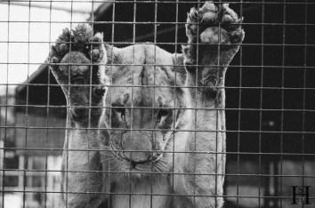 20121030-162717-Argentinien, Lujan, Weltreise, Zoo-_DSC8024