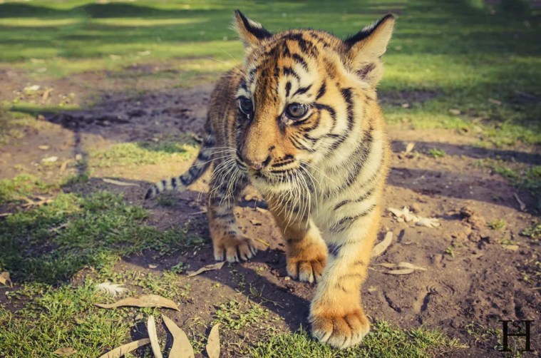 20121030-165946-Argentinien, Lujan, Weltreise, Zoo-_DSC8202-Edit-2