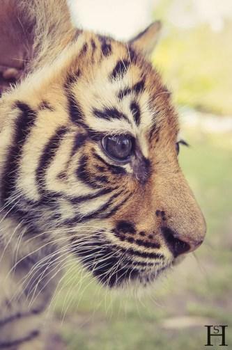 20121030-170532-Argentinien, Lujan, Weltreise, Zoo-_DSC8230
