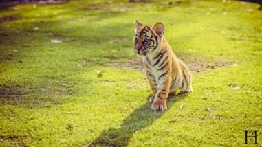 20121030-170719-Argentinien, Lujan, Weltreise, Zoo-_DSC8237-Edit-3