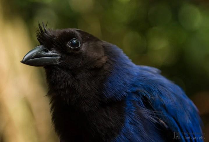 20121130-150237-Brasilien, Foz de Iguacú, Iguazú, Vogelpark, Weltreise-_DSC3878