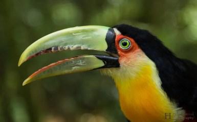 20121130-151154-Brasilien, Foz de Iguacú, Iguazú, Vogelpark, Weltreise-_DSC3916