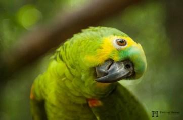 20121130-153839-Brasilien, Foz de Iguacú, Iguazú, Vogelpark, Weltreise-_DSC3953