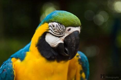 20121130-154221-Brasilien, Foz de Iguacú, Iguazú, Vogelpark, Weltreise-_DSC3976