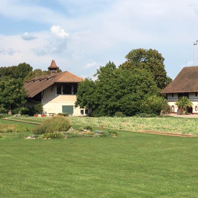 Draußen malen Tipps von Tine Klein. Aquarell zeigt eine Scheune in den Merian Gärten Basel. Aquarell mit Tonwertstudie, Blog-Herz-der-Kunst