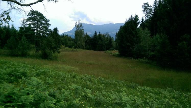 Meggerwald with view to Mount Rigi