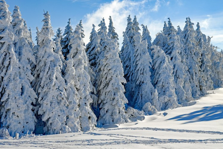 Winterlandschaft mit verschneiten Tannen