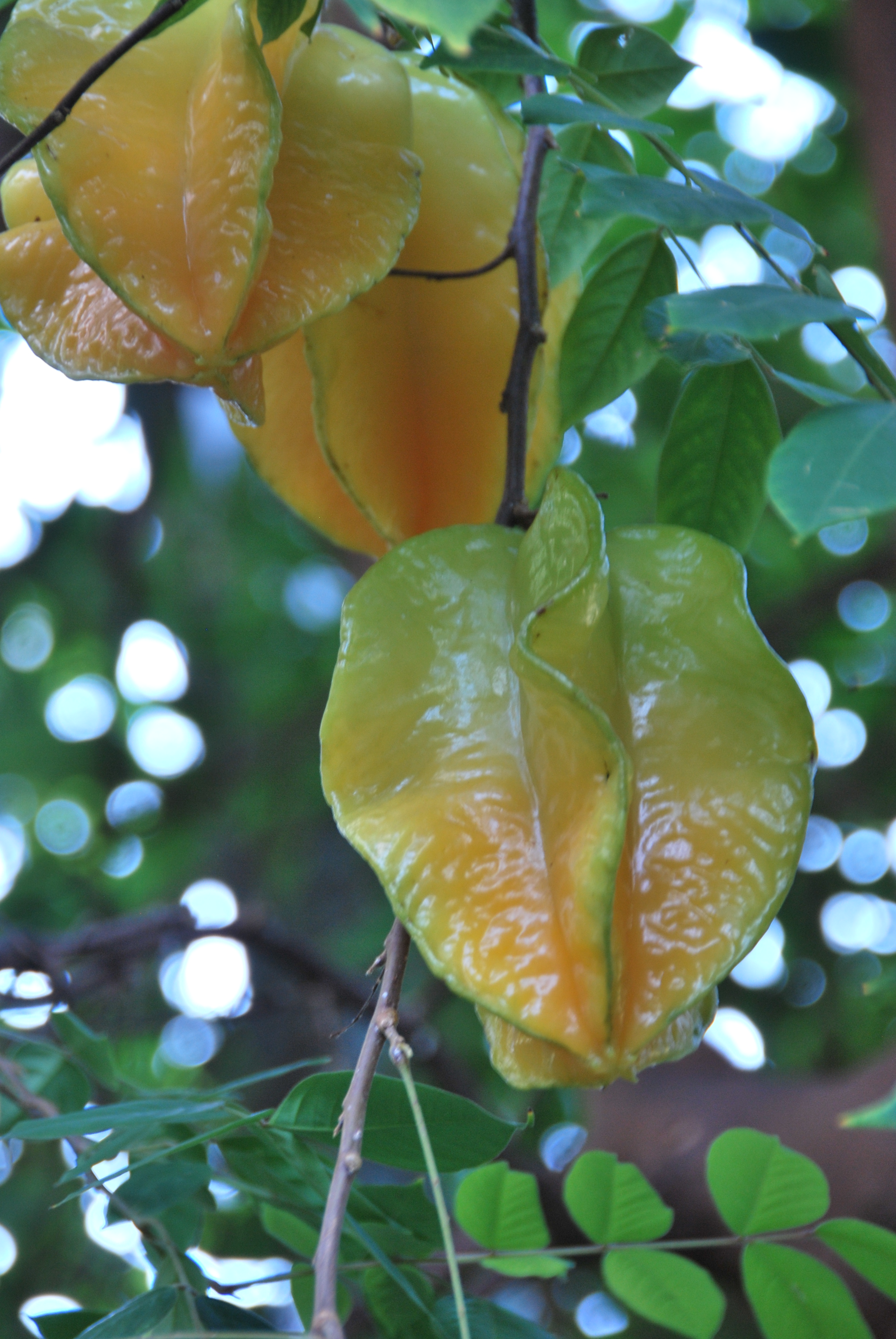 Best 12 Fruits Name With Pictures In English