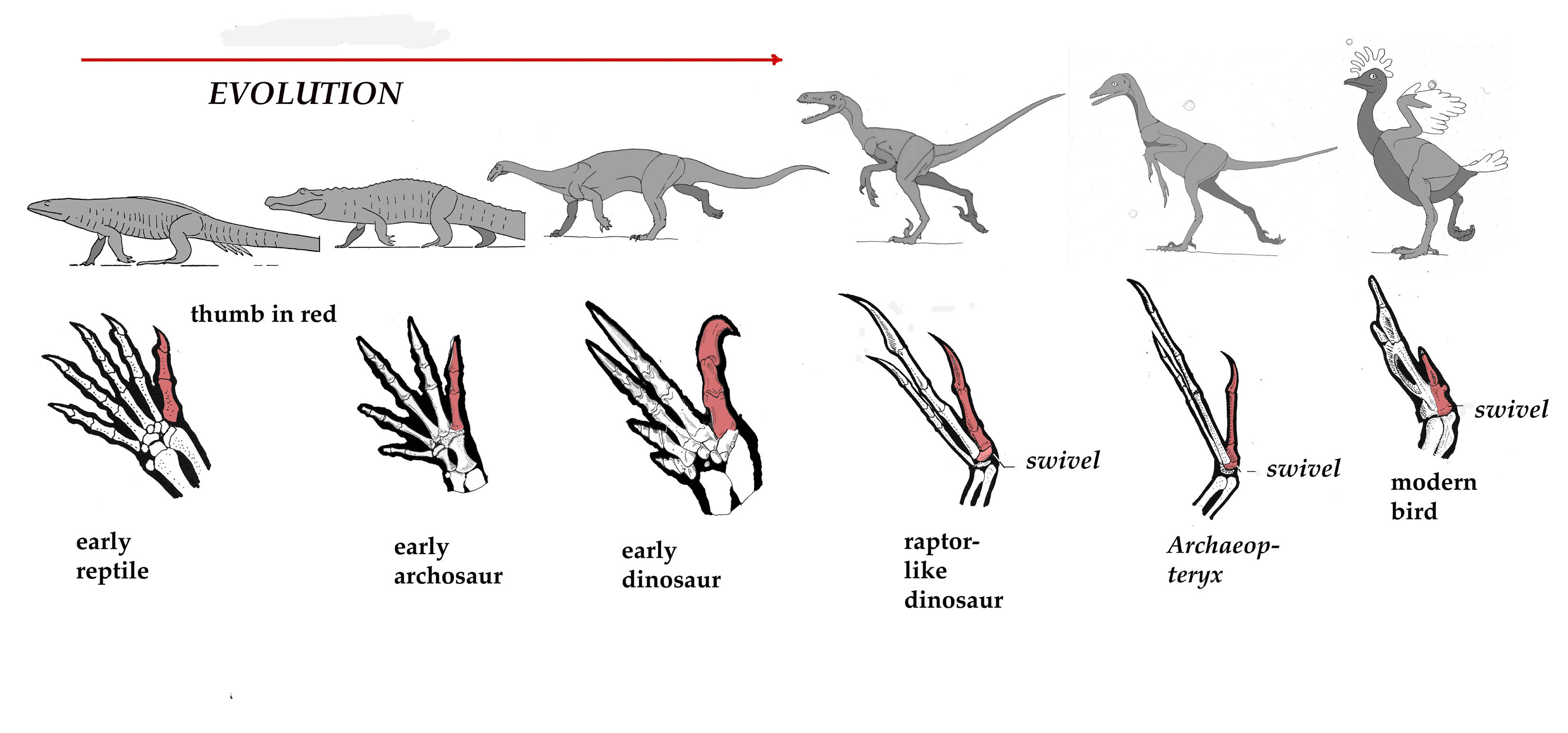 Flat Footed Reptiles To High Stepping Chickens