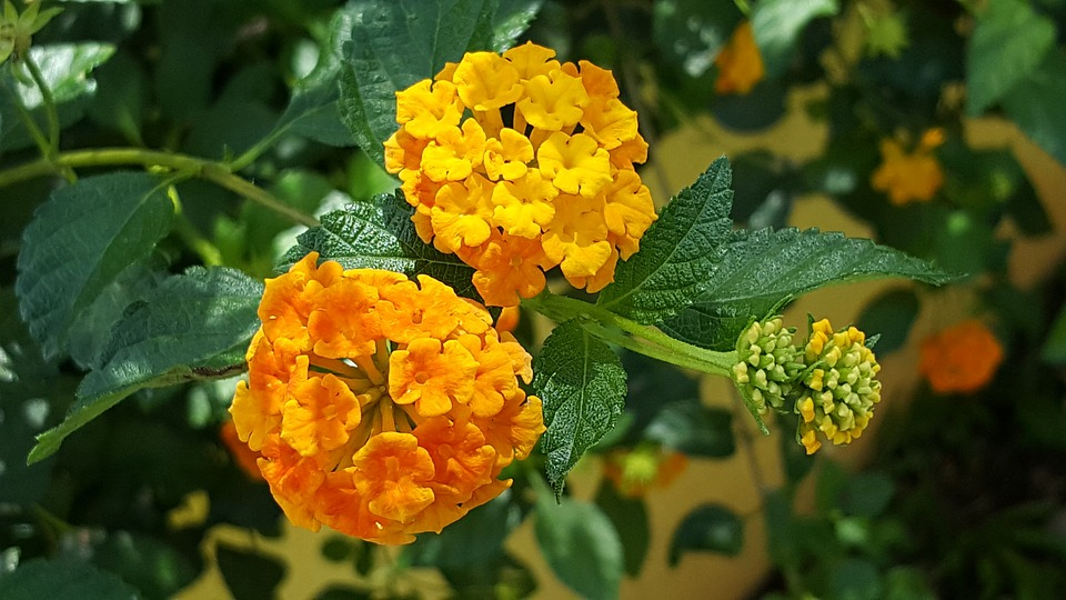 Texas Native Plants And Flowers