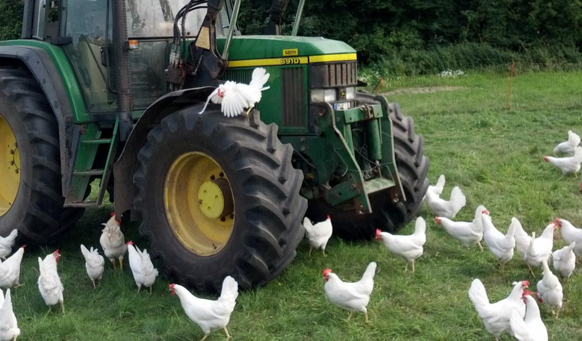 Repost: die Krux mit den Hühnern 1+2
