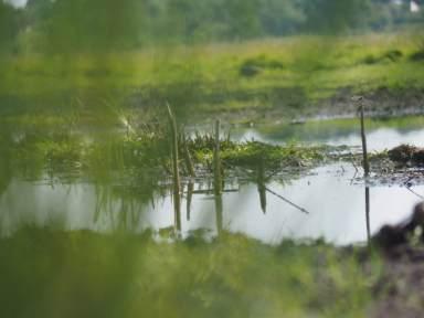 Stiftungsflächen, wiedervernässtes Moor