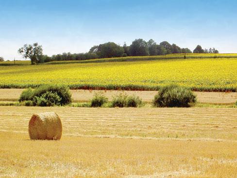 La Guimarderie 14th Century Farmhouse Chinon Loire Valley