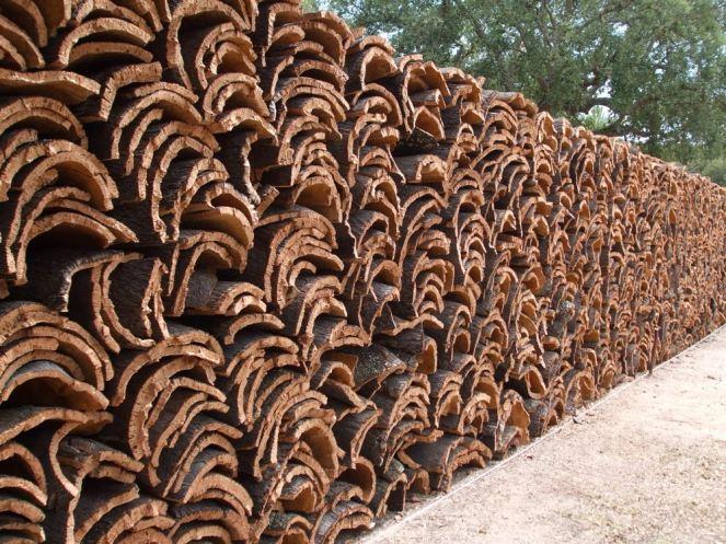 Cork Harvest 8