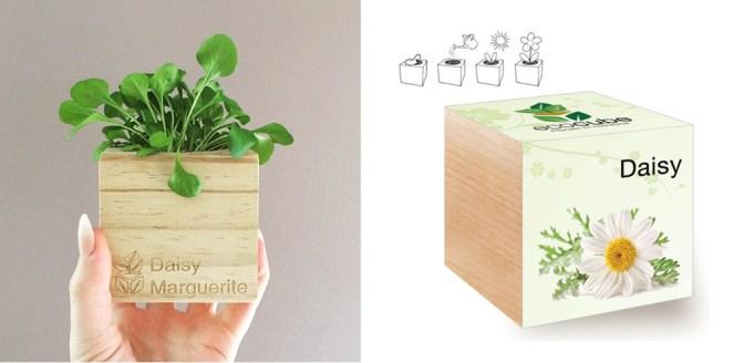 Houseplants Ecocube