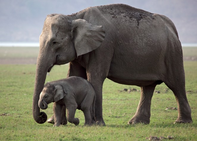 Elephant Parade Asian Elephants