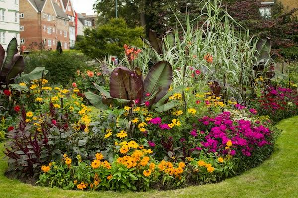 plants that thrive in rain gardens