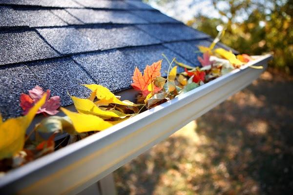 prepare garden for fall in November