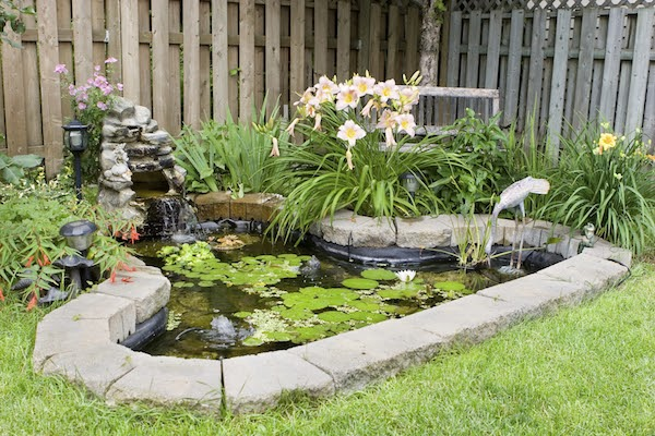 prepare garden for fall in September