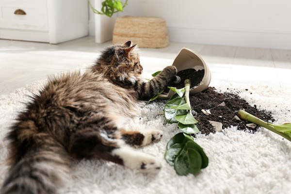 cat with broken plant on shag rug