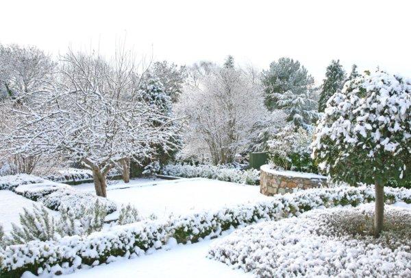 Snow Covered Backyard Garden