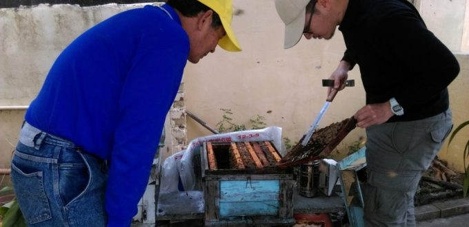 養蜂日記x田間放蜂-紅斗笠整理蜜蜂