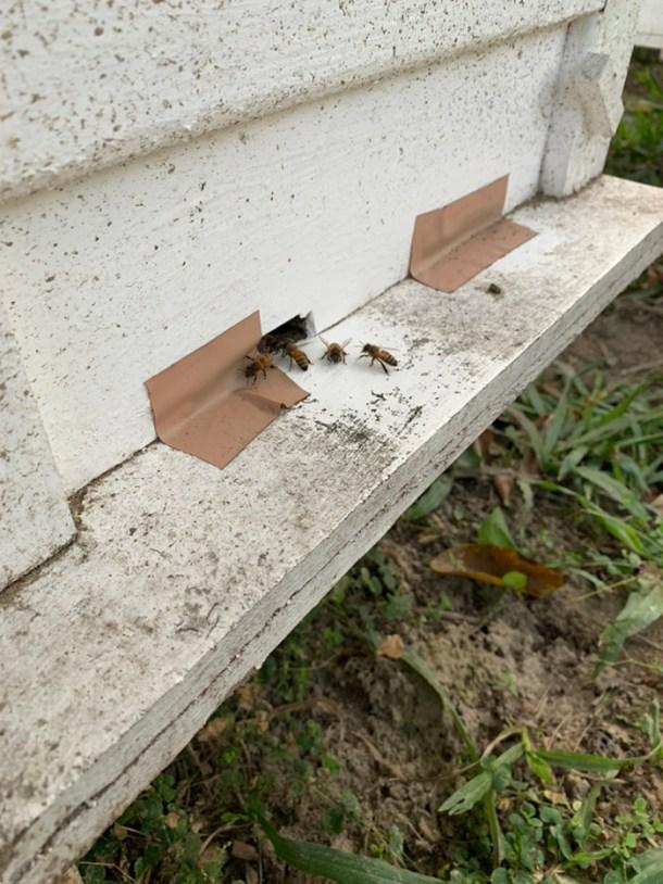 蜜蜂禦寒方式_縮小蜂箱出入口