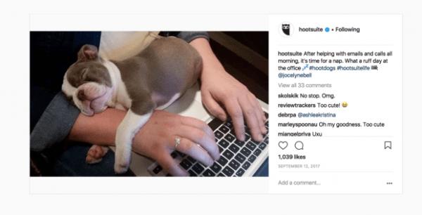 Screenshot of an Instagram post featuring a puppy asleep at a desk   Hootsuite Blog