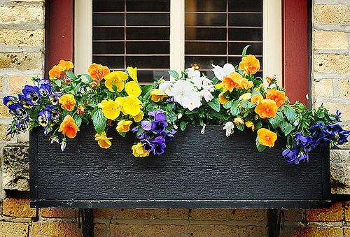 Window box filled with colorful flowers.