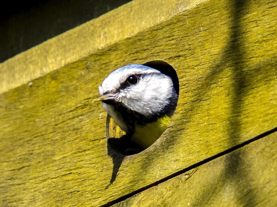 Wild Birds Nesting