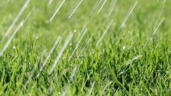 Rainfall on lawn