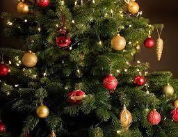 Decorated Nordmann Fir Tree