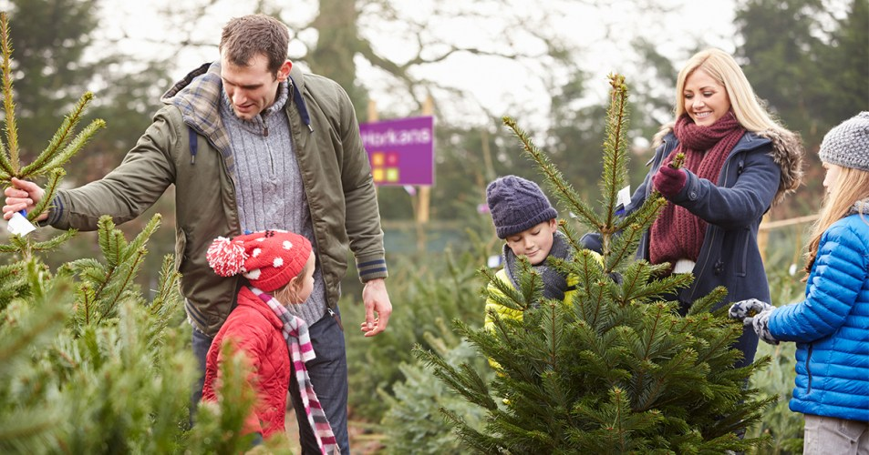 A family choosing a Christmas Tree at Horkans.